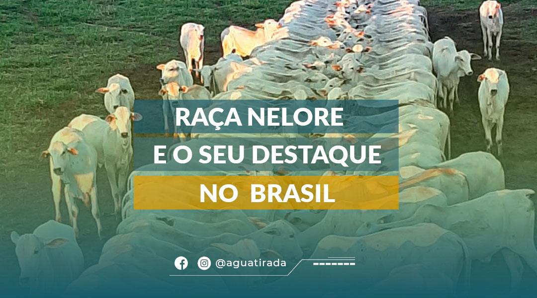 Raça Nelore e seu destaque no Brasil