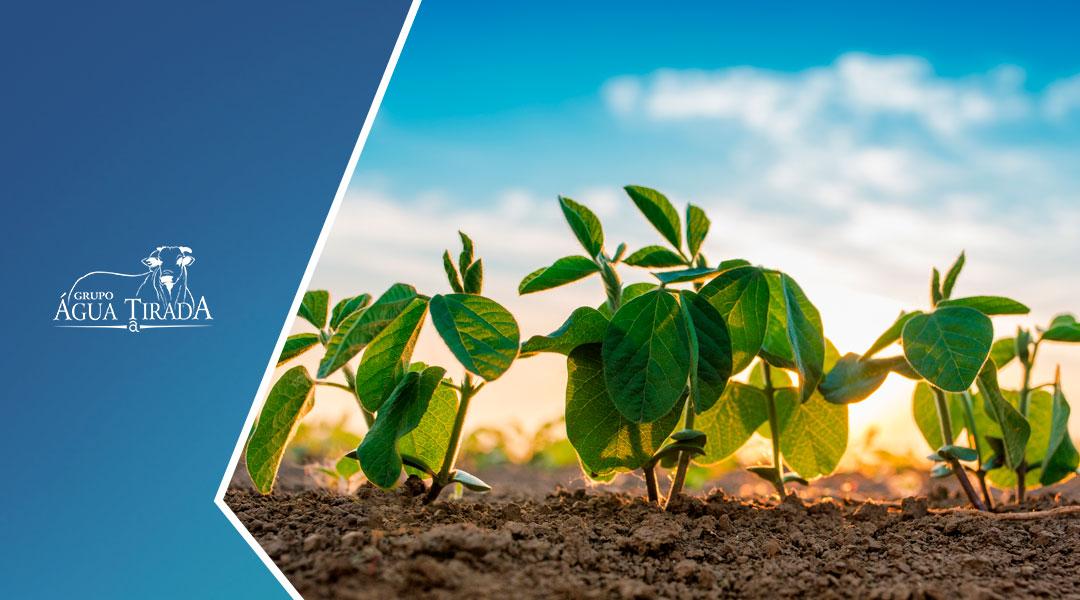 Técnicas para aumentar a produtividade na agricultura