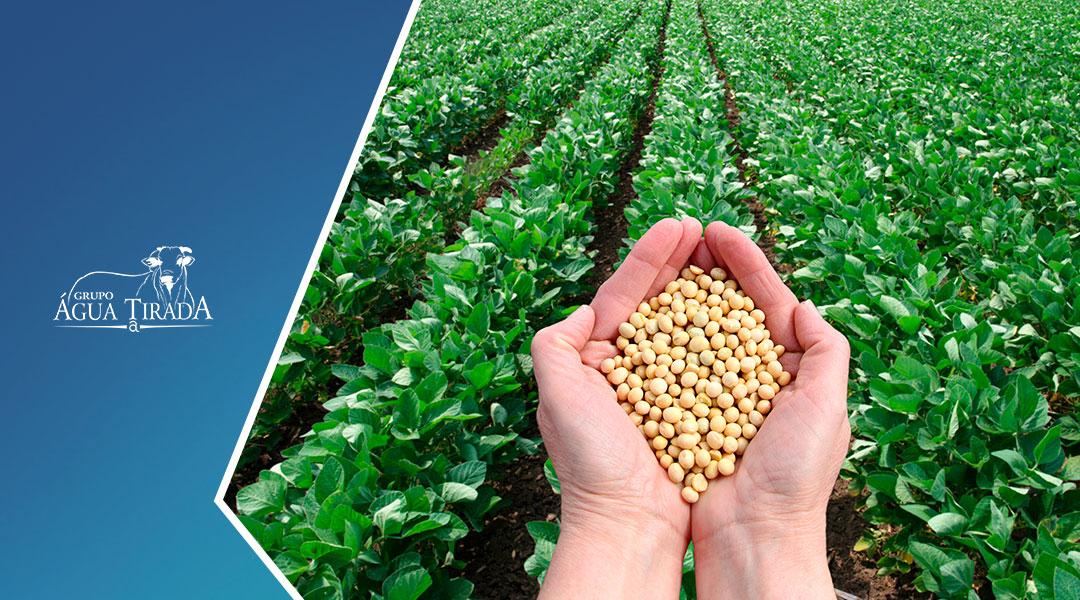 Benefícios da Agricultura Sustentável.