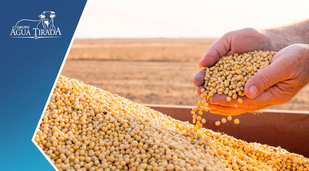 A cultura da soja proporcionou uma grande revolução alimentar.