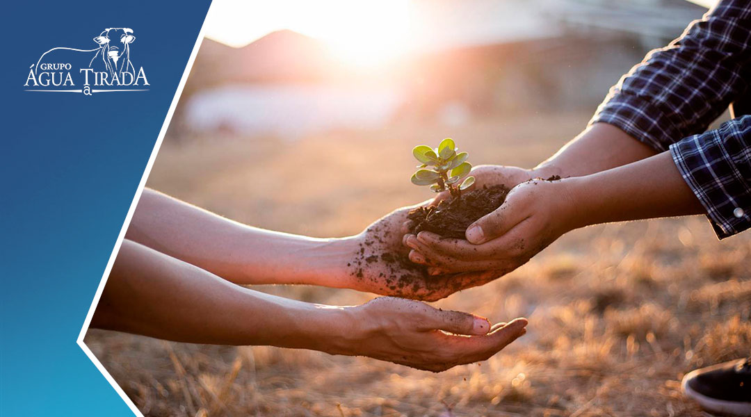 A importância da agricultura no Brasil